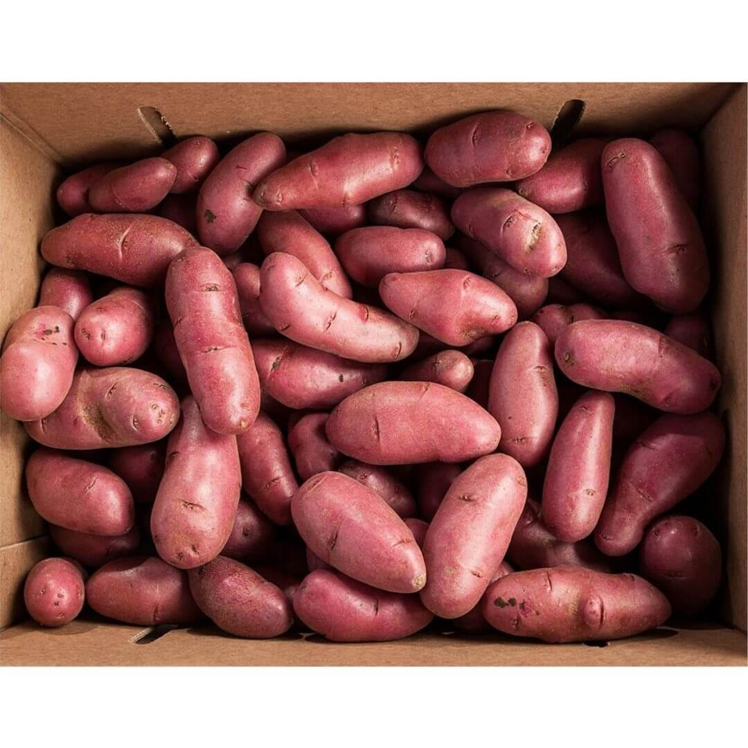 Gourmet Specialty Imports, Your Specialty Onion Source, Grande Gourmet, Fresh Red Fingerling Potatoes